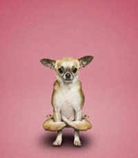 В Китае появилась йога для собак
