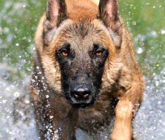 Ученые рассказали, какие собаки наиболее опасны
