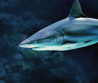Еще одна туристка пострадала от акулы в Египте