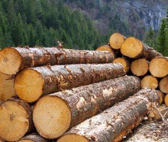 Украина в соглашении с ЕС согласилась отменить мораторий на экспорт древесины