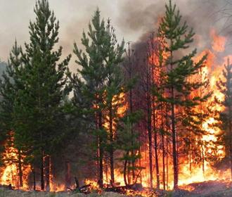 Рада увеличила штрафы за нанесение вреда окружающей среде