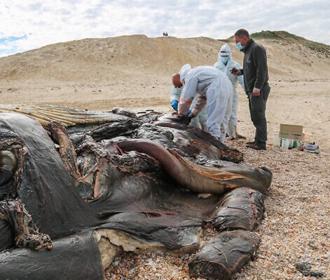 В Израиле закрыли пляжи из-за разлива нефтепродуктов