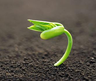 Преимущества и особенности использования инокулянтов для бобовых культур