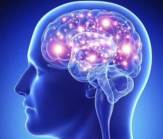 IQ можно предсказать по активности головного мозга