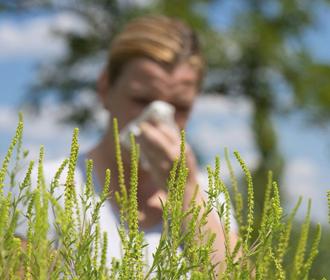 Найдено эффективное против аллергии вещество