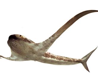 Ученые обнаружили древнюю «крылатую» акулу