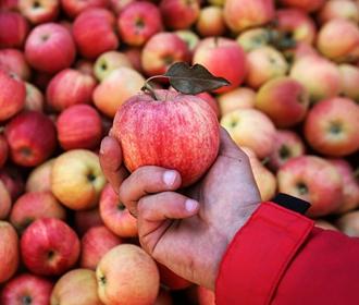 Яблоки улучшают работу мозга – ученые