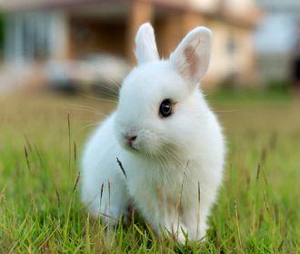 Кролик впервые увидел бассейн и с разбега прыгнул в него