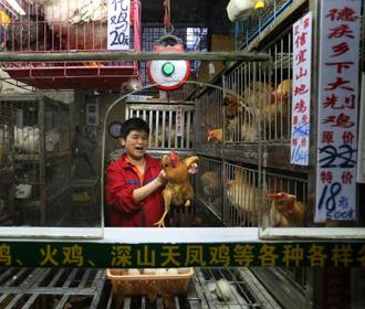 ВОЗ призывает ограничить торговлю животными на рынках из-за риска распространения инфекций