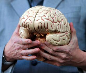 Ученые объяснили уменьшение мозга современного человека