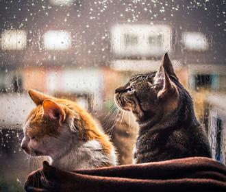 В Украине в ближайшие дни установится дождливая погода