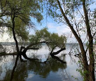 Комфортная летняя погода ожидается в Украине в ближайшие дни