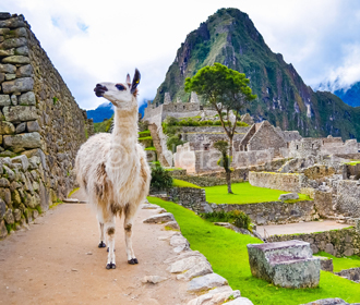 Правительство утвердило безвизовый режим с Перу