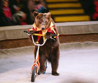 Раде рекомендуют передать животных из цирков в реабилитационные центры
