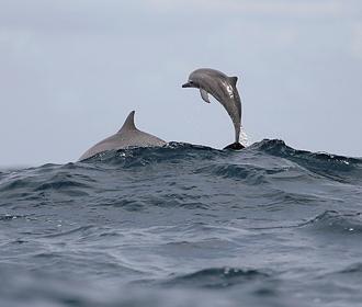 Дельфины помогли спасти дрейфовавшего 12 часов в ледяной воде мужчину
