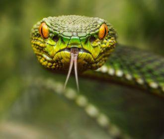 Медики сообщили, сколько украинцев пострадали от укусов змей жарким летом