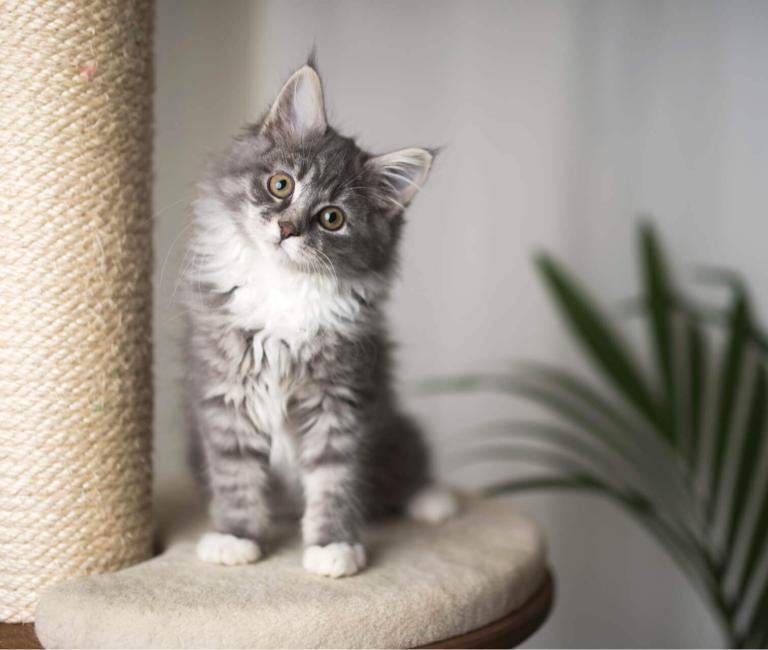 Сухий корм Фріскіс для маленьких кошенят