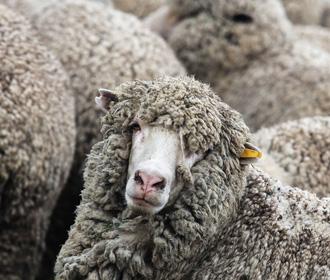 Роналду поменял дом из-за овец